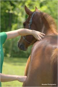 Winchester VA Equine Massage