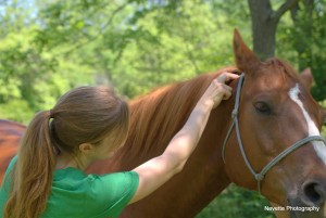 Photo of certified equine horse massage therapist Nell